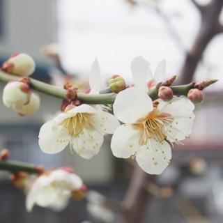 木に咲く花